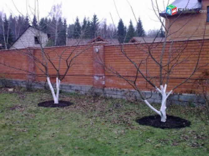 Ծառերի էտ,ձևավորում,եվ բուժումներ
