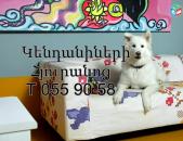 Kendanineri Hyuranoc ( kacaran ), Гостиница для животных,( շների հյուրանոց )