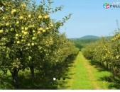 Խնձորի այգի xndzori aygi hoxataracq