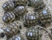 Tortoises/Turtles/Lizards/Snakes