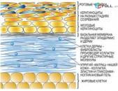 Դասընթացներ Ուսուցում կոսմետոլոգիա բուժ-կոսմետոլոգի կողմից  das@ntacner .Aparatayin kosmetologia