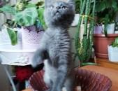 Կատուներ, տղա, աղջիկ, տան պահած նվիրում եմ
