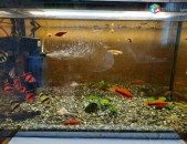 akvarium dzknerov ev ir sarqerov. Ակվարիում ձկներով և իր բոլոր սարքերով։ аквариум