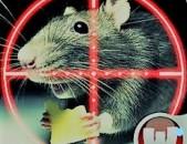 Destruction Rats rat Struggle against rats  arsenic  An effective remedy Պայքար առնետների դեմ  rmouse mice rats rat  kill rats tat how to eliminate mice?  how to eliminate rats?