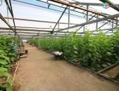 Կոդ՝50142 Վաճառվում է 3000քմ բիզնես տարածք  Մուսալեռում:
