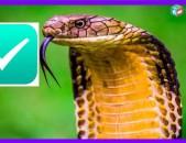 ✔Պայքար օձերի դեմ . payqar odzeri dem ✔ odz oc