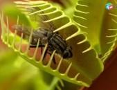 Сухой корм - свысушенные насекомые : мухи, жуки