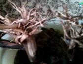 Коряга-дерево для аквариума
