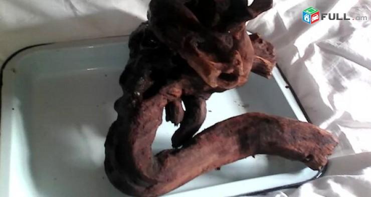 Голова мамонта (Коряга)