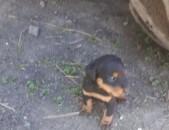 yak terrier