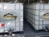 Ձկնամթերքի տեղափոխման համակարգերի տեղադրում բեռնատարներում akvarium jri bak