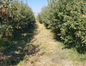 Ptxatu aygi խնձորի այգի աշտարակի բետոնե տրասի անմիջապես կողքը