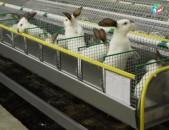 Վաճարվում եմ ճագարի ֆերմա