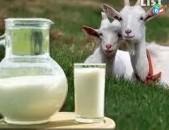 Ayci kat Այծի կաթ և պանիր