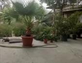 Палма палма