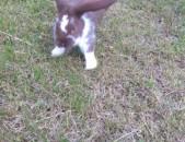 Jagar кролик rabbit