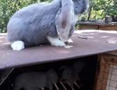 Rabbit кролик