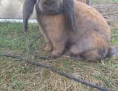 Кролик rabbit