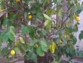 Limoni car