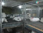 Ճագարների Անասնաբուժական Ծառայություն, Ветринарные услуги кроликов