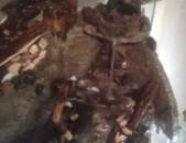 Akvarium dzknerov