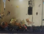50 litranoc akvarium ira amen inchov u dzknerov