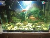 Akvarium dzknerov (cixridner)