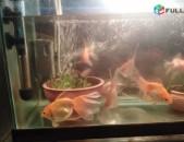 Dzkner akvarium voske dzknik