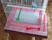 Tutakner vandakov bolor paraganerov թութակներ попугаи с клеткой