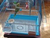 Tutakner vandakov  թութակներ попугаи с клеткой