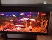 Akvarium 280 lit