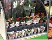 Նորություն Հայաստանում Ձեզ ենք ներկայացնում սառնարաններ նախատեսված ծաղիկների համար։