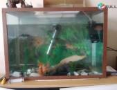 100 L akvariyum