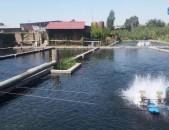 Երևանից 7կմ, տրասսայի վրա, վայրկյանում 100լիտր ինքնահոս ջուր, գործող ձկնաբուծարա