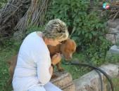 Дрессировка, воспитание и коррекция поведения всех пород собак / Շների վարժեցում, մարզում, վարքի շտկում ցանկացած ցեղատեսակի