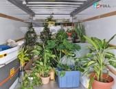 Senyakayin buyser cankacac tesaki սենյակային բույսեր ցանկացած տեսակի տարբեր տեսա