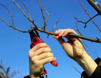 Ծառերի մասնագիտական էտ և խնամք, Ծառերի Կտրում ` DRUJBAYOV, Փայտերի ջարդում