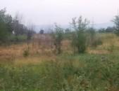 BB516 Արարատի մարզ գ Դարակերտ՝ 5000քմ տնամերձ հողատարածք