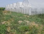 BB633Արարատի մարզ գյուղ Խոր Վիրապ 4200/3400 կարկասե ջերմոց 2021 թ կառուցած տաքդեղի բերքով
