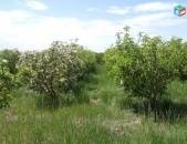 Խնձորի այգի