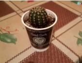 Mec u poqr kaktusner