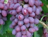 Viktor Xaxoxi vazer vinogradnaya loza  Viktor Виноград tsaxikneri виктор виноград