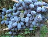 Gala Xaxoxi vazer vinogradnaya loza Виноград tsaxikneri buyseri mets tesakani