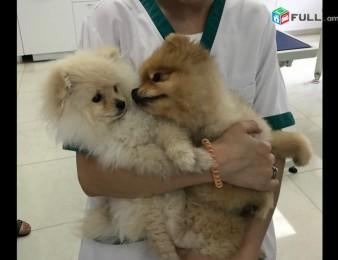 Անասնաբուժական կլինիկա, Ветеринарная клиника,Anasnabuj, Veterinary clinic.Anasnabujakan klinika ,Anasnabuyj.