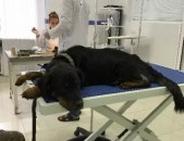 Անասնաբուժական կլինիկա, Anasnabuj, Anasnabuyj, Anasnabujakan, Ветеринарная клини